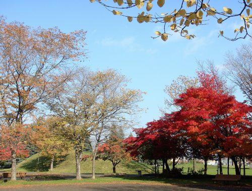 公園の紅葉樹