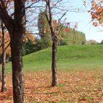紅葉した公園